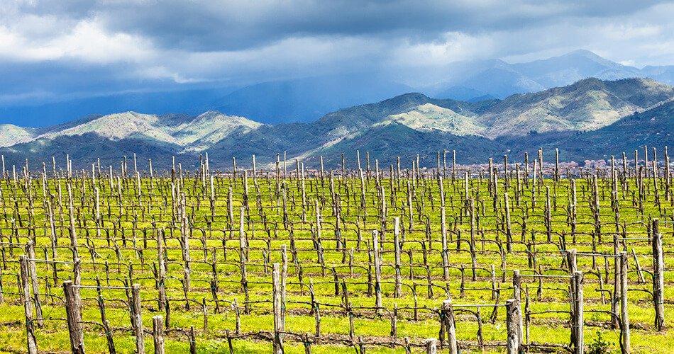 sicily-etna-vineyard-view