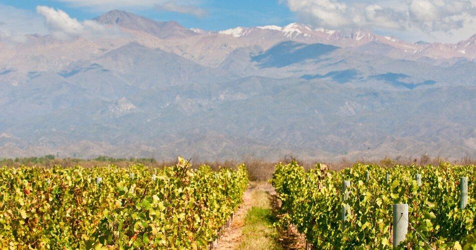 vineyards-mendoza-argentina
